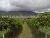 cultivo-de-maracuya-2