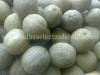 cultivo-melon-5