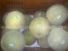 cultivo-melon-6